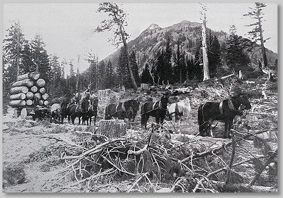 Abner Weed logging operation